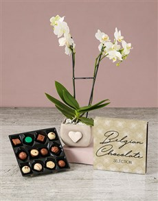 flowers: Thoughtful Orchid With Chocs!