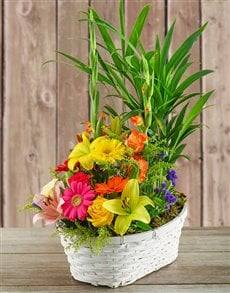 gifts: Plant with Flower Arrangement in a Basket!