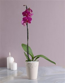 plants: Phalaenopsis Orchid in Pottery!