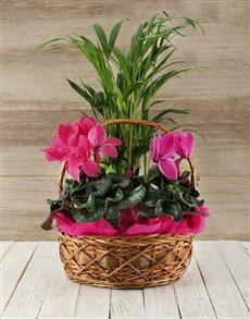 plants: Basket of Indoor Plants!