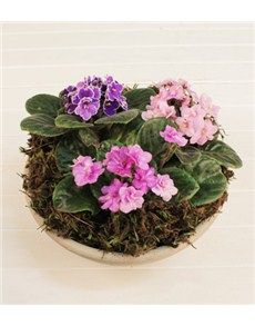 flowers: African Violet Plant!