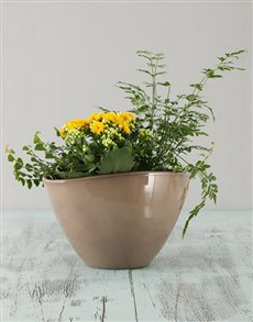 plants: Mixed Ceramic Pot!