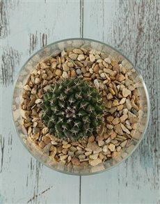 plants: Calming Cactus Vase!