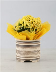 flowers: Kalanchoe Pot!