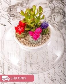 plants: Flowering Cacti Vase!