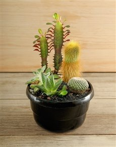 gifts: Cactus Garden!