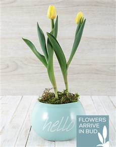 plants: Hello Spring Tulip Pot!