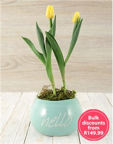 flowers: Hello Spring Tulip Pot in Bulk!