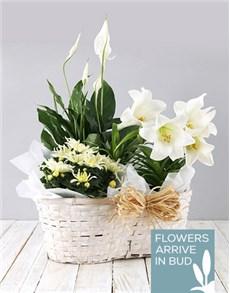 flowers: Mixed St Joseph Lily Basket!