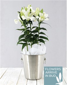 flowers: Lily Plant in Ice Bucket!