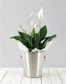 flowers: Spathiphyllum in Ice Bucket!