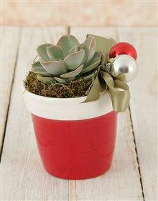 plants: Santa's Succulent Pot!