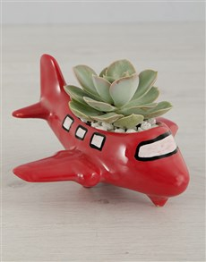 gifts: Succulent Aeroplane!