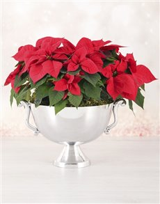 plants: Floating Poinsettia Bowl!