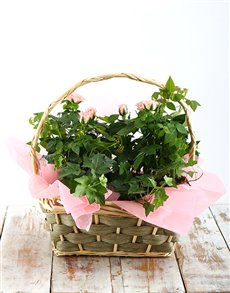 plants: Pink Rose Bush Basket!