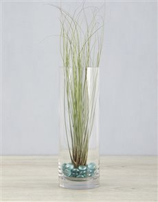 plants: Juncifolia Air Plant in Cylinder Vase!