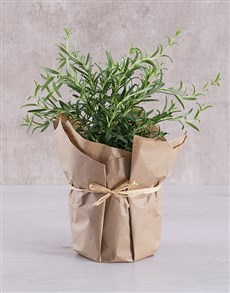 plants: Rosemary Plant in Brown Paper!