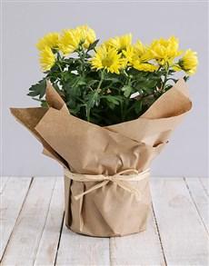 flowers: Chrysanthemum Plant in Craft Paper!