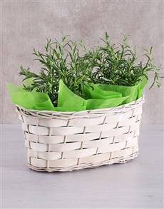 flowers: Double Rosemary Plant Basket!