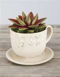 plants: Glitter Succulent in Cup and Saucer Pot!