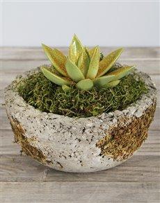 plants: Glitter Succulent in Cement Bonsai Bowl!