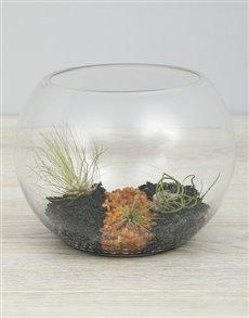 plants: Air Plant Trio In Black Stone Fish Bowl!