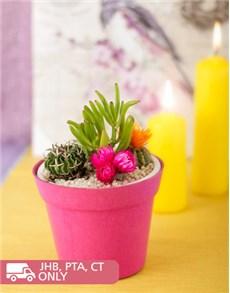 plants: Cacti Garden!