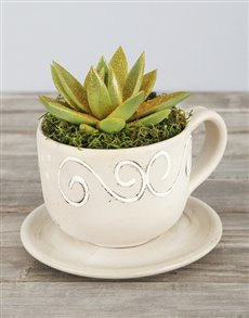 plants: Gold Glitter Succulent in Cup and Saucer Pot!