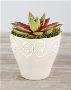 plants: Red Glitter Succulent in Ceramic Pot!