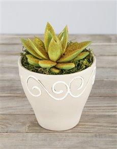 plants: Gold Glitter Succulent in Ceramic Pot!