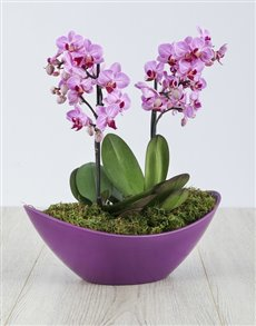 plants: Orchid in Purple Boat!