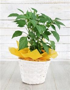 plants: Likes It Hot Plant!