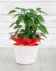 plants: Hot Mess Plant!