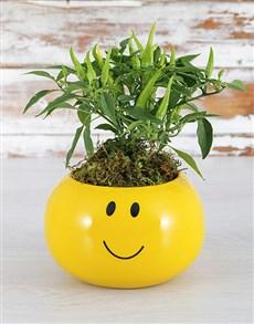 plants: Posh Spice Plant !