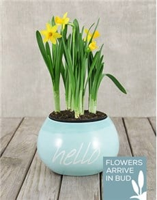 flowers: Daffodil Plant in Hello Pot!