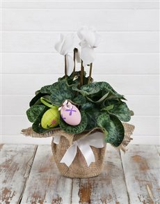 gifts: Easter Cyclamen Arrangement!