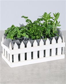 plants: Picket Fence of Herbs!