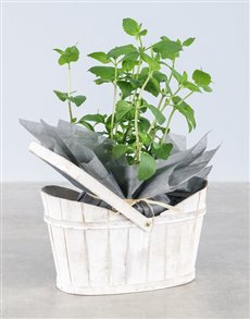 gifts: Parsley Herbs in White Basket!