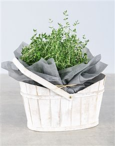 plants: Thyme Herbs in White Basket!