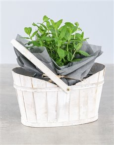 plants: Mint Herbs in White Basket!