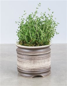 flowers: Thyme Herbs in Ceramic Pot!
