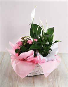 flowers: Woven Basket of Spathiphyllum and Rose Bush!