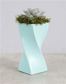 gifts: Succulent in a Twisty Vase!