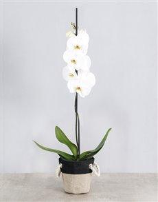 plants: White Phalaenopsis Orchid Basket!