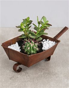 flowers: Cactus and Succulent Wheelbarrow!