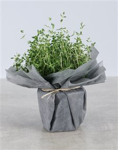 plants: Thyme Herbs in Wrapping!
