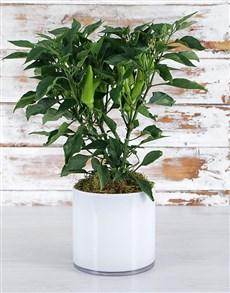 plants: Feel the Heat Plant!