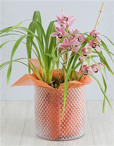 plants: Cymbidium Orchid in Cylinder Vase!
