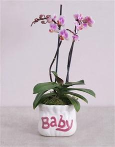 flowers: Midi Phalaenopsis Orchid in Pink Baby Vase!