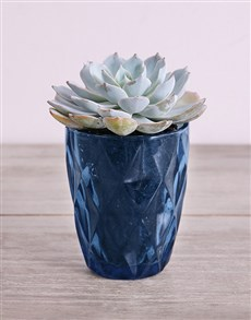plants: Desert Arrangement in Blue Votive!